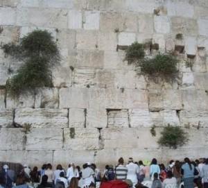 Wat kunnen Noachieden lezen tijdens Tishe B'Av?